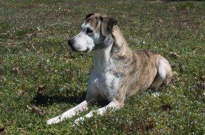 New Clients | Clayton Veterinary Associates